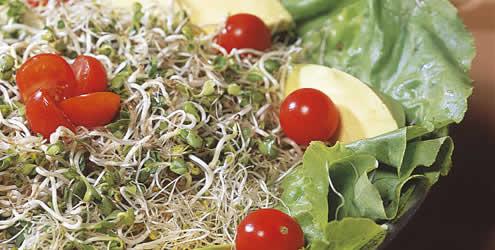 receita-salada-broto